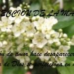 IDDSMM- La lección de la Madre